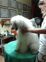 GROOMING-Workshop-BONELL (165)